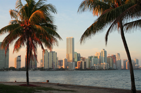 miami-skyline-with-palm-trees